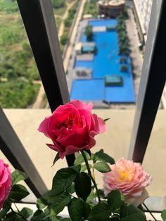 Cho thuê căn hộ giá rất rẻ tại căn hộ The Park Residence mặt tiền Nguyễn Hữu Thọ