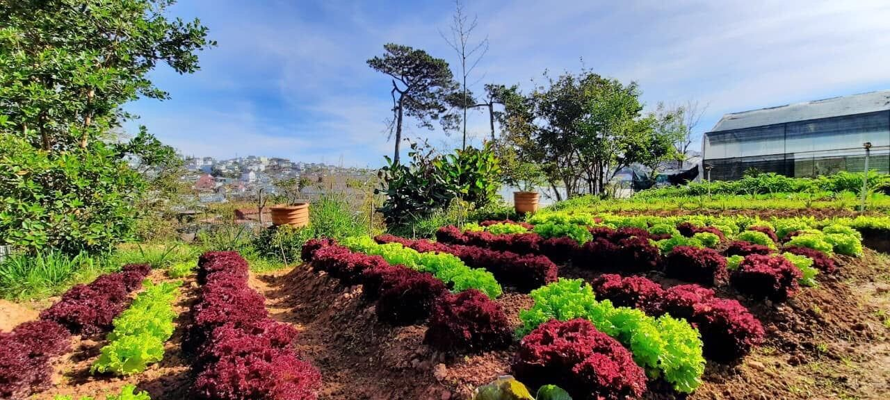 Lạc vào xứ xở hoa thơm trong ngôi làng Đông Dương giữa phố thị sương mù