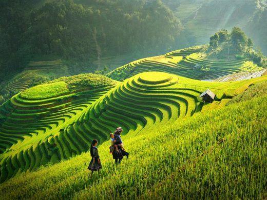 Lịch trình tour du lịch Mộc Châu